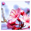cloudedbliss userpic