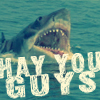 Shark LOL, hay you guys! [iconzicons]