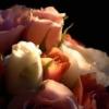 floating_petals userpic