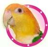 birdybooty userpic