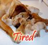 Ann: Tired puppies