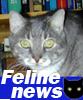 Pol, Feline_newscatster