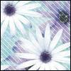 teshiconz userpic