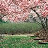 D.: spring