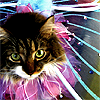 looking happily deranged: kitties! - fairy princess