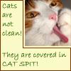 kit: cats_catsarenot