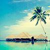Tom: Tropical Paradise.