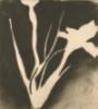 ironflowers userpic