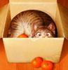 кыса и апельсины