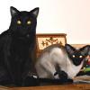 cats plotting (brax & Aida)