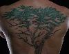 phoenix: tattoo