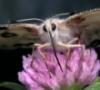 пустые глаза бабочки