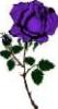 purplerosebud8 userpic