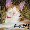 My kitty Ruby