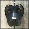 Geoviki: dog - head in fence