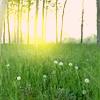 jjwmy: sunlight