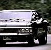 arwensouth: Impala!Peek
