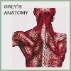grey'sanatomy