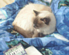 annie_kitty