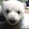 bear-sweet