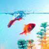 Cass E. Pants: image - goldfish