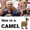 This Camel
