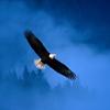 летать и не бояться