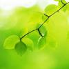 groene lenteblaadjes