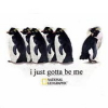 penguins - gotta be me