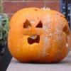 pumpkin woe