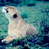 leeuwinka userpic