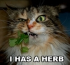 Has a Herb