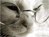 Туилиндо: Кот ученый