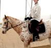 Beah: horsey