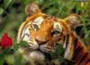 tigrro4ka userpic