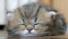 Carol Bartholomew: Kittyloaf