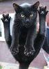 основной кот
