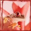 redfrog