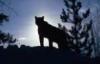 puma_cougar userpic