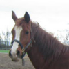 goldenfilly userpic