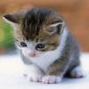 unsure kitten