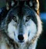 spiritwolf7 userpic
