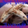 snakechild_ink userpic