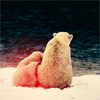 enelya_rose: polar bear cuteness