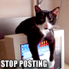 Cat Stop Posting