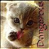 What's Left - Danger Kitten