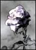 my_buried_heart userpic