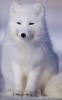 blaine_fox userpic