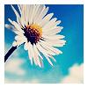 rain_saint userpic