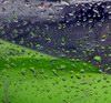 дождь на крыле